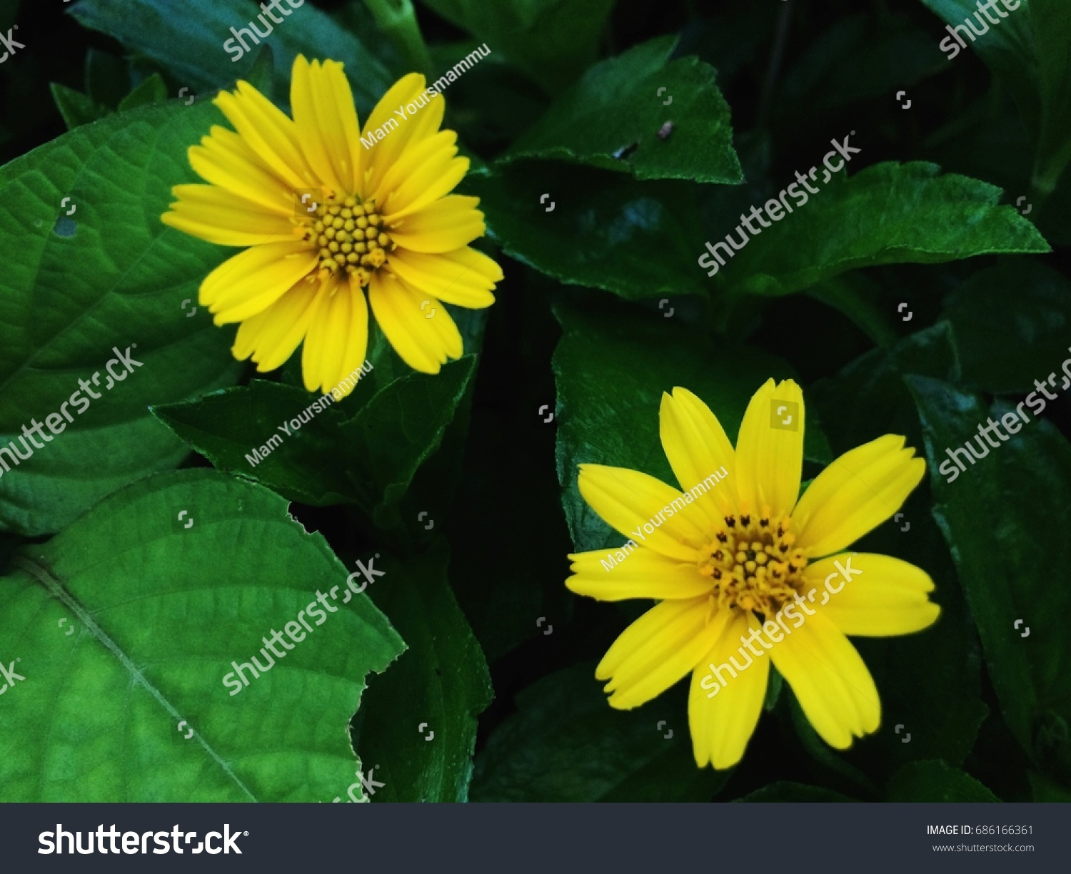 Tiny Yellow Flowers Green Leaves Background Stock Photo Edit Now