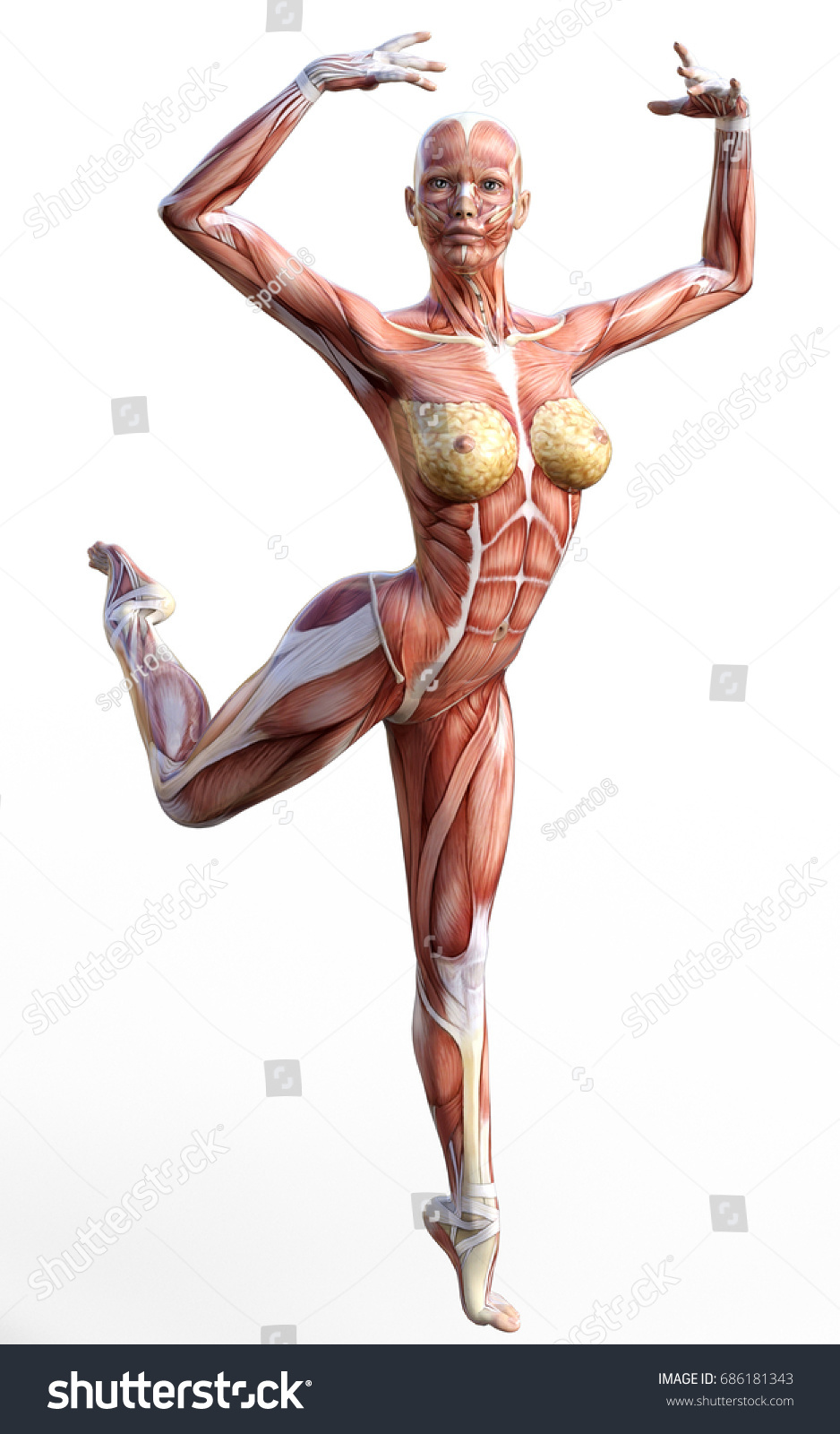 3 D Rendering Anatomy Woman Muscles Shapes Stock Illustration