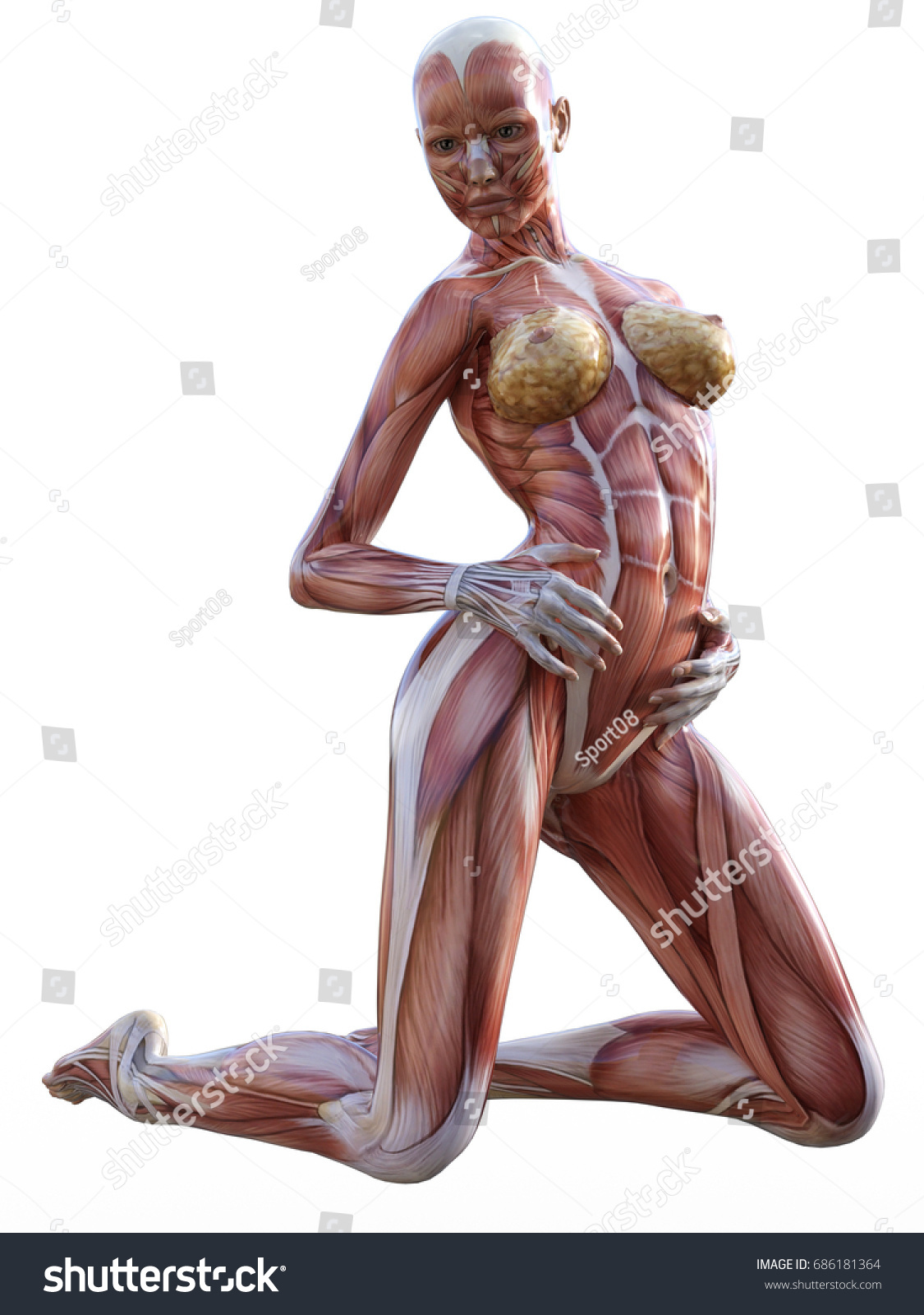 3 D Rendering Anatomy Woman Muscles Shapes Stock Illustration ...