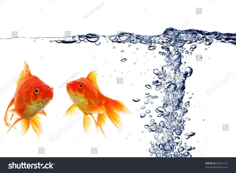 Goldfish swimming water fish tank air stock photo 68641513 for Air swimming fish