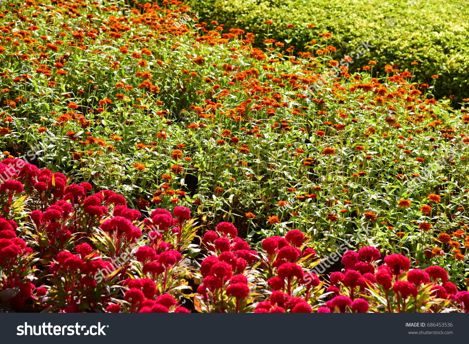 Gardens flowers ornamental plants thailand garden stock photo edit gardens with flowers and ornamental plants thailand garden beautiful garden izmirmasajfo