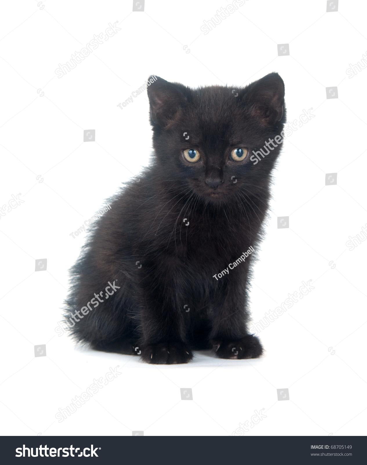 Cute Black Kitten Sitting White Stock Shutterstock