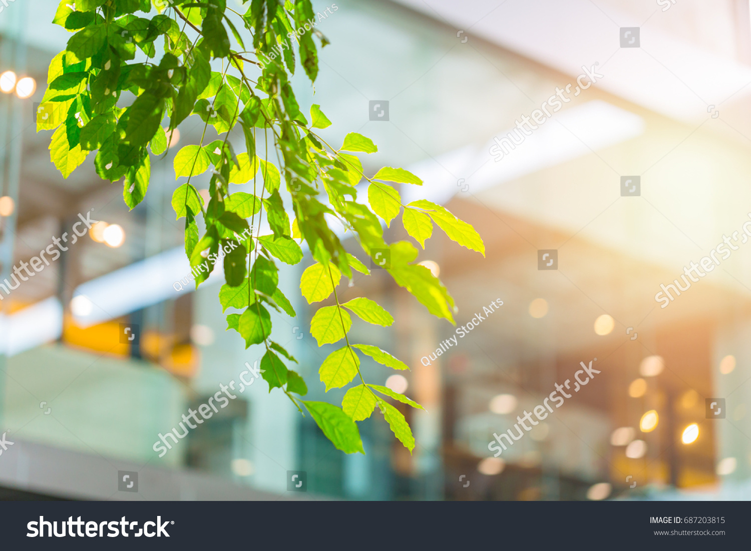 eco office. Eco Building Or Green Office Plant Tree And Garden In City Concept. \