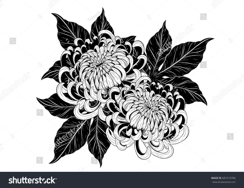 Chrysanthemum Vector On White Background Chrysanthemum Stock Vector