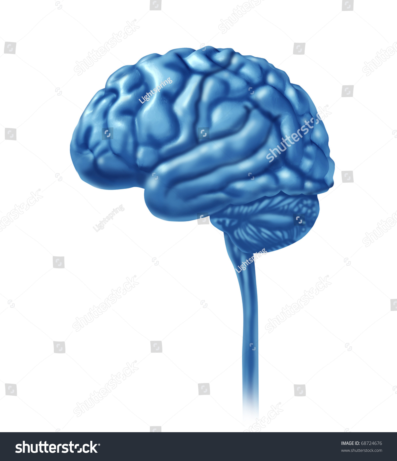 brain lobe sections divisions of mental neurological lobes activity isolated stock photo. Black Bedroom Furniture Sets. Home Design Ideas