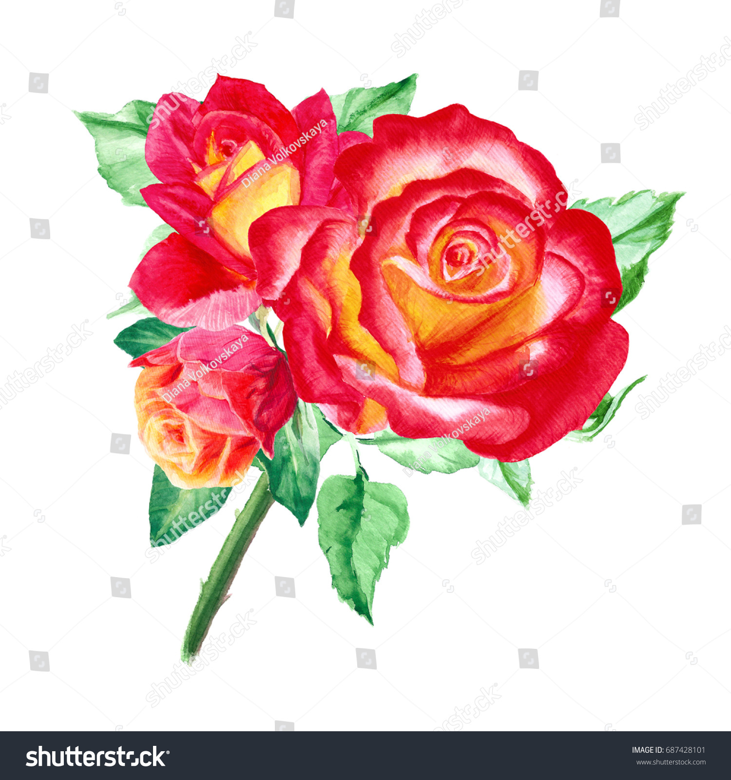 Watercolor Pink Red Yellow Roses Rose Stock Illustration 687428101