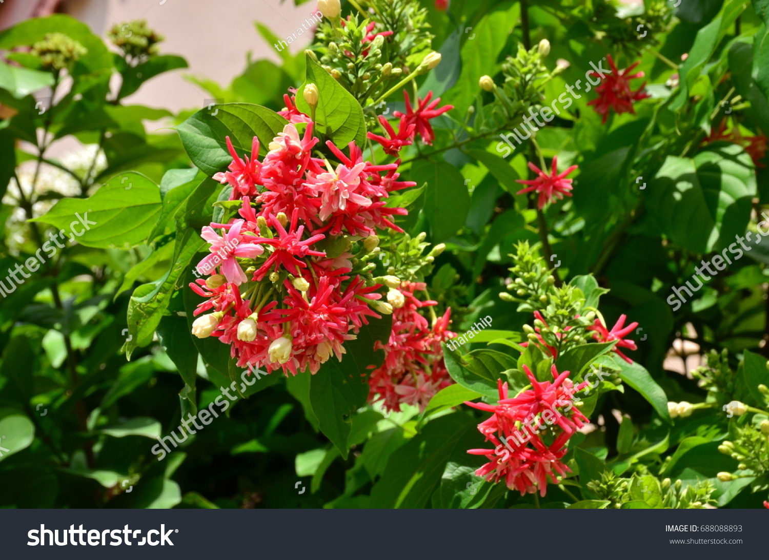 Bushes Pink Flowers Green Leavesbackground Image Stock Photo