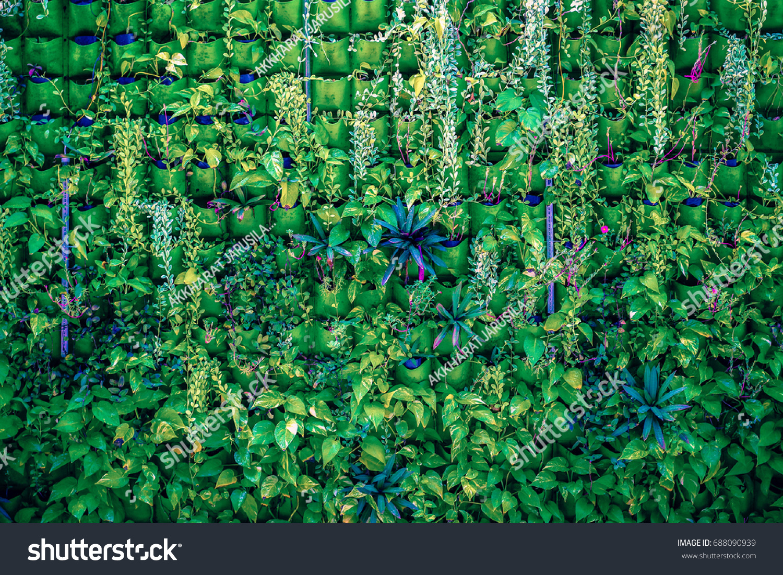 Green Plants Vertical Garden Wall Texture Stock Photo Edit Now