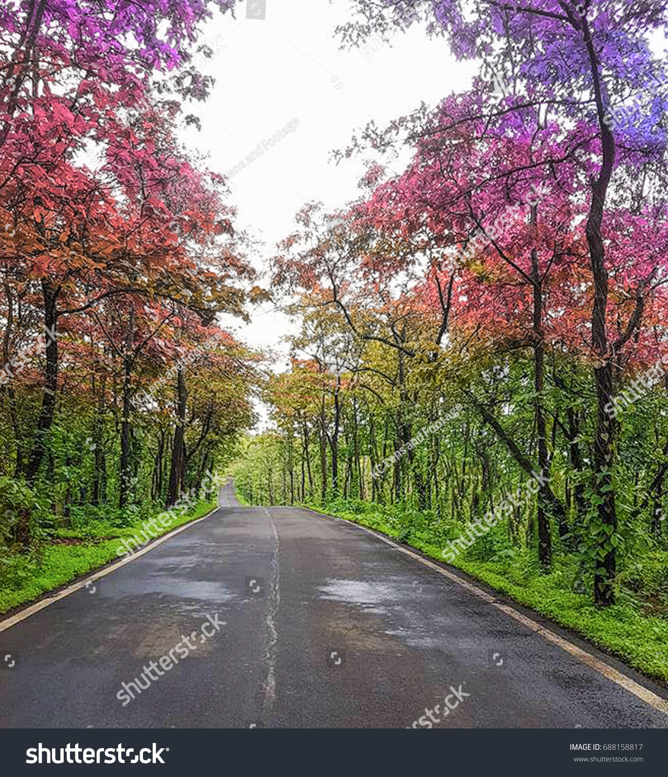 Colorful Trees On Long Road Curving Stock Photo 688158817 - Shutterstock