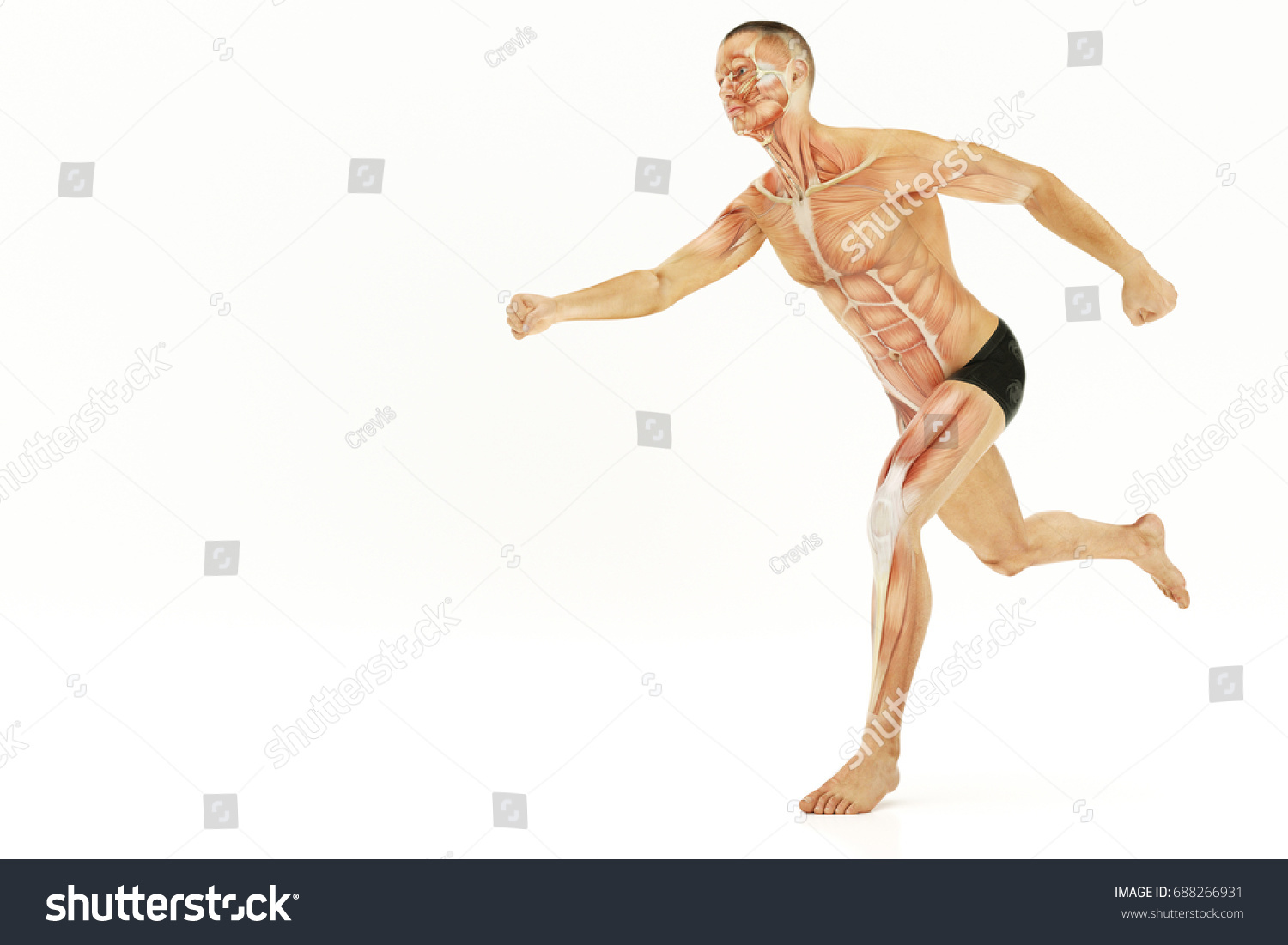 Anatomy Running Human Body Muscles 3 D Stock Illustration 688266931