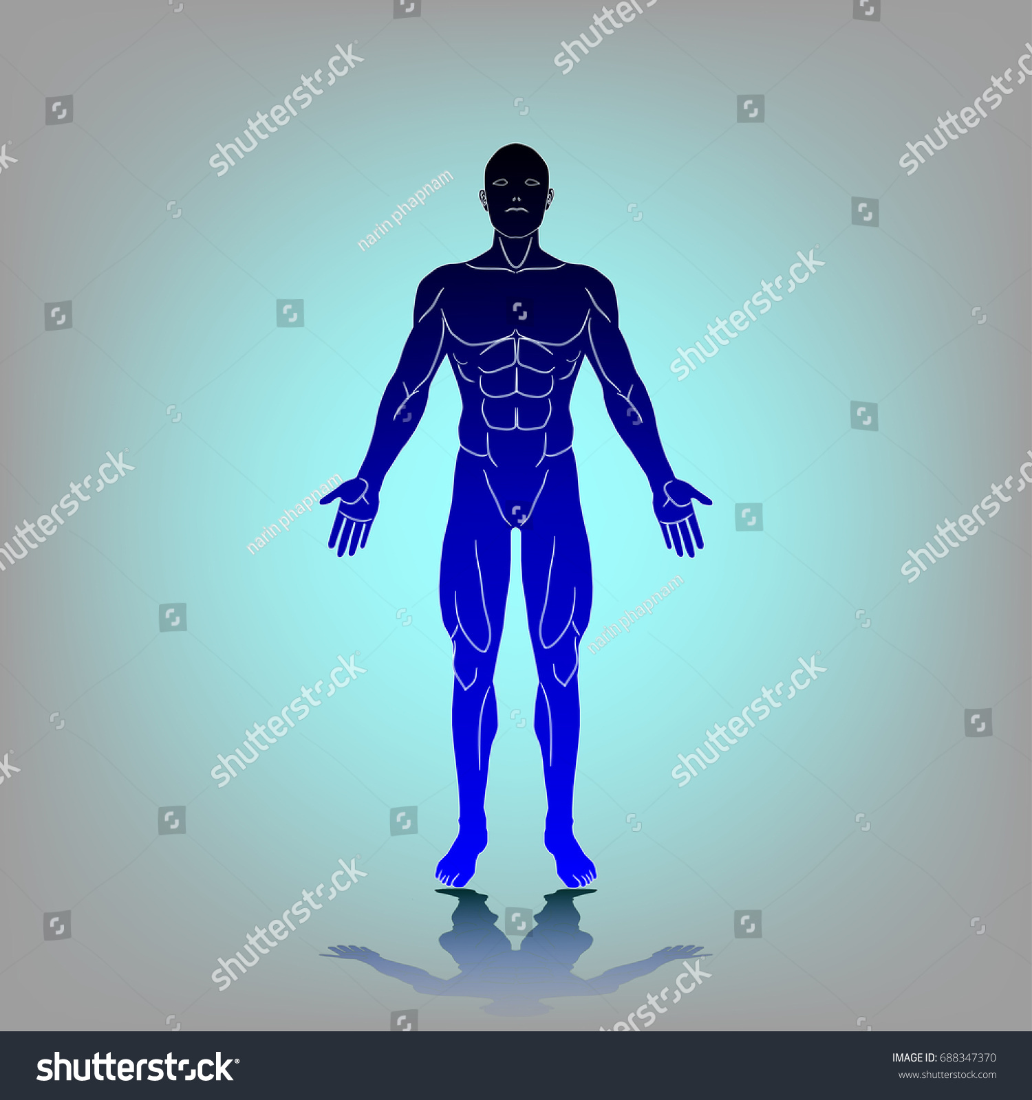 Anatomy Adult Male Body Human Front Stock Vector 688347370 ...