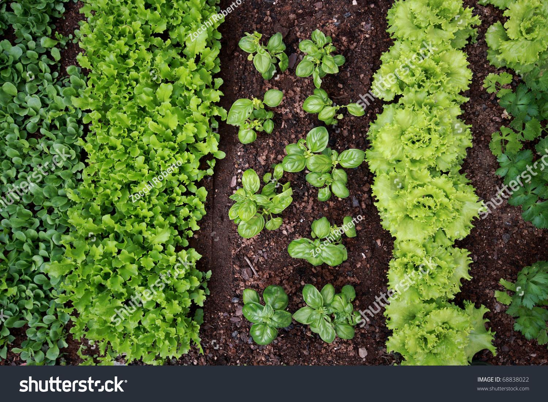 vegetable garden stock photo   shutterstock, Garden idea