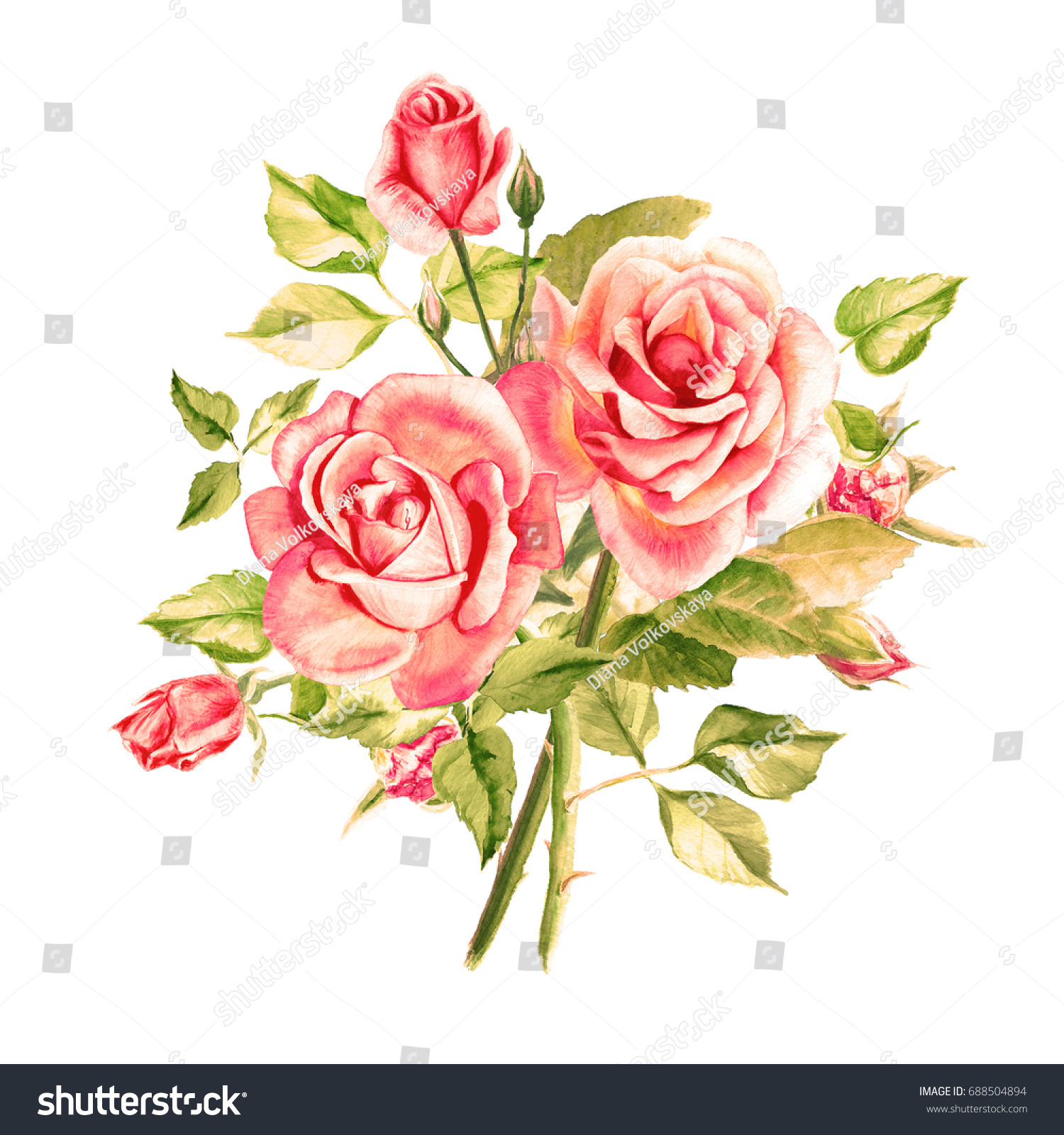 royalty free stock illustration of watercolor pink roses bouquet