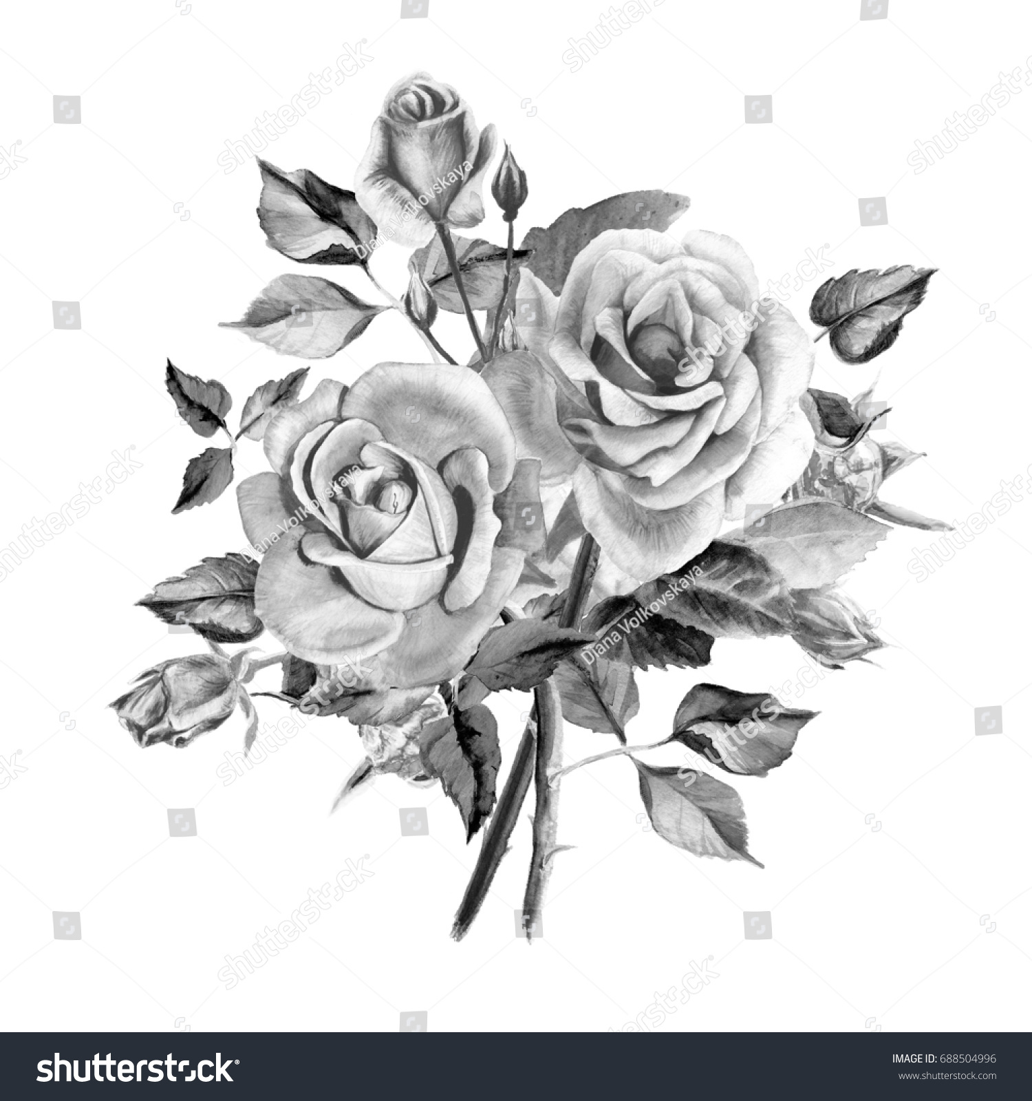 Watercolor Black White Roses Bouquet Roses Stock Illustration