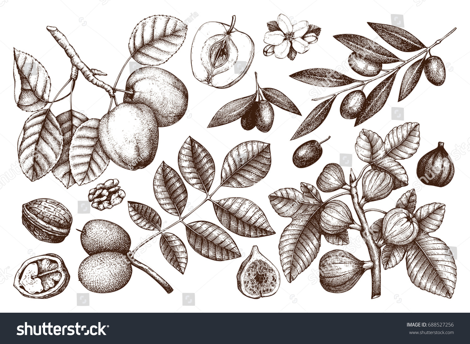 Collection of hand drawn trees illustration vintage set of leaves fruits seeds nuts flowers sketch white background botanical garden drawing
