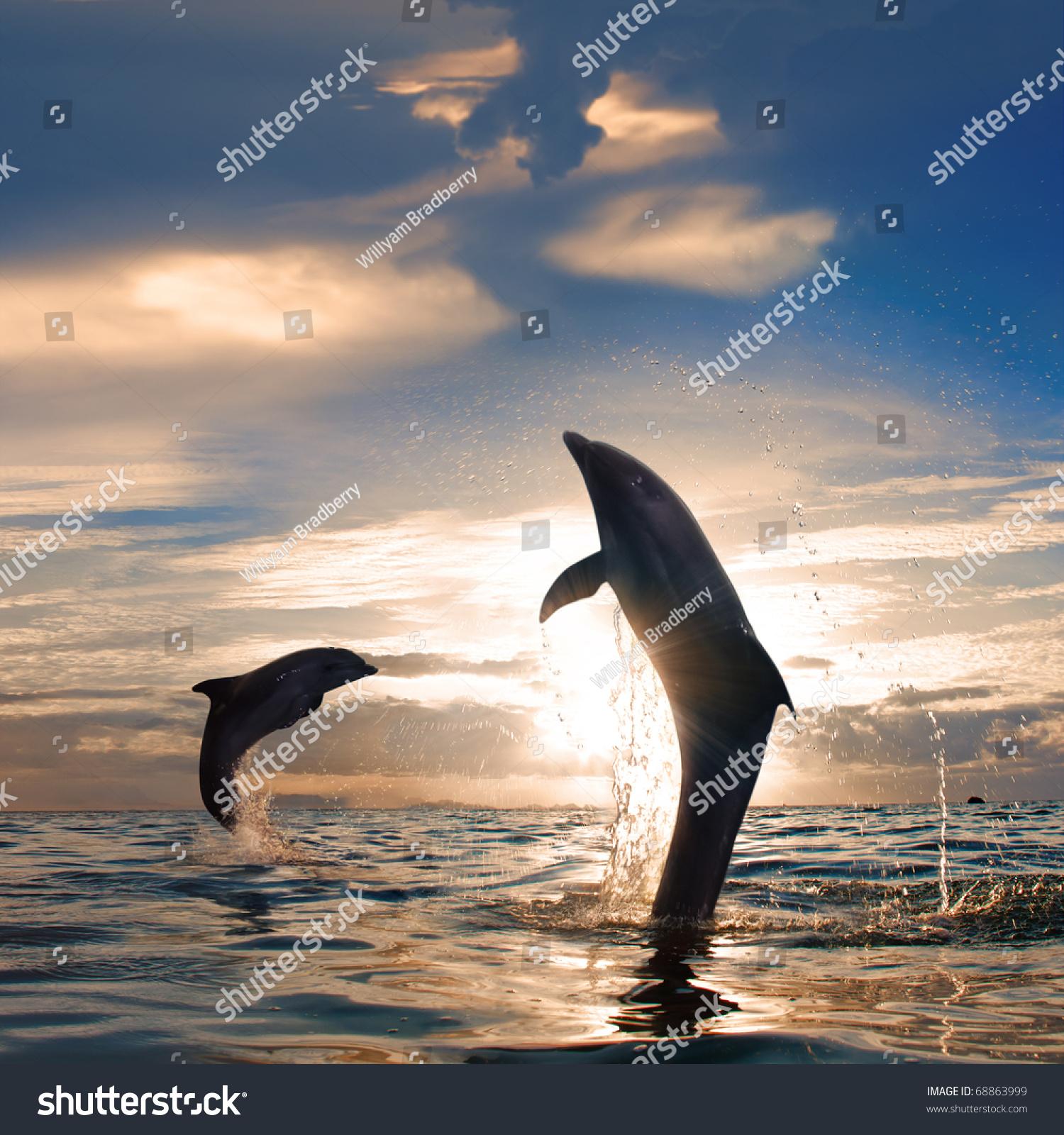 Прыжок дельфина на закат скачать