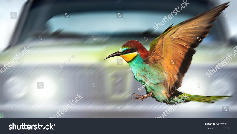Saving Birds Cars Night Creativity Symbols Stock Photo Download Now