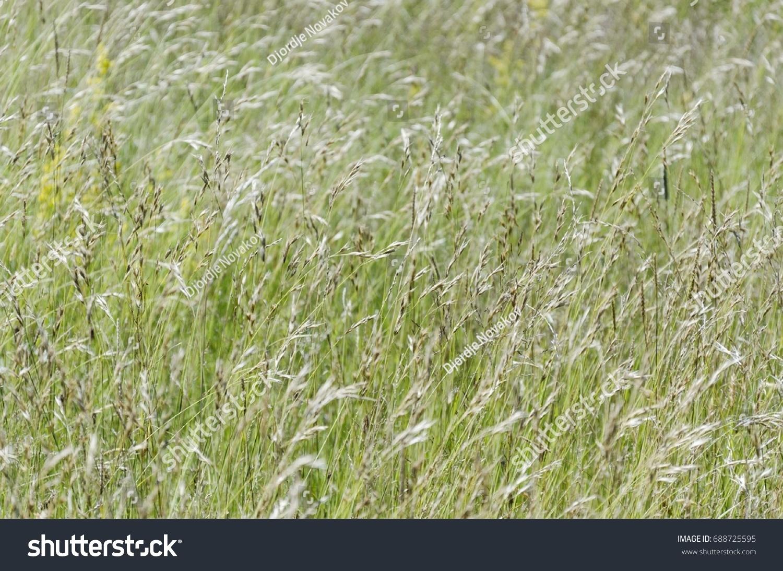 tall grass field long grass id 688725595 mountain tall grass field ez canvas