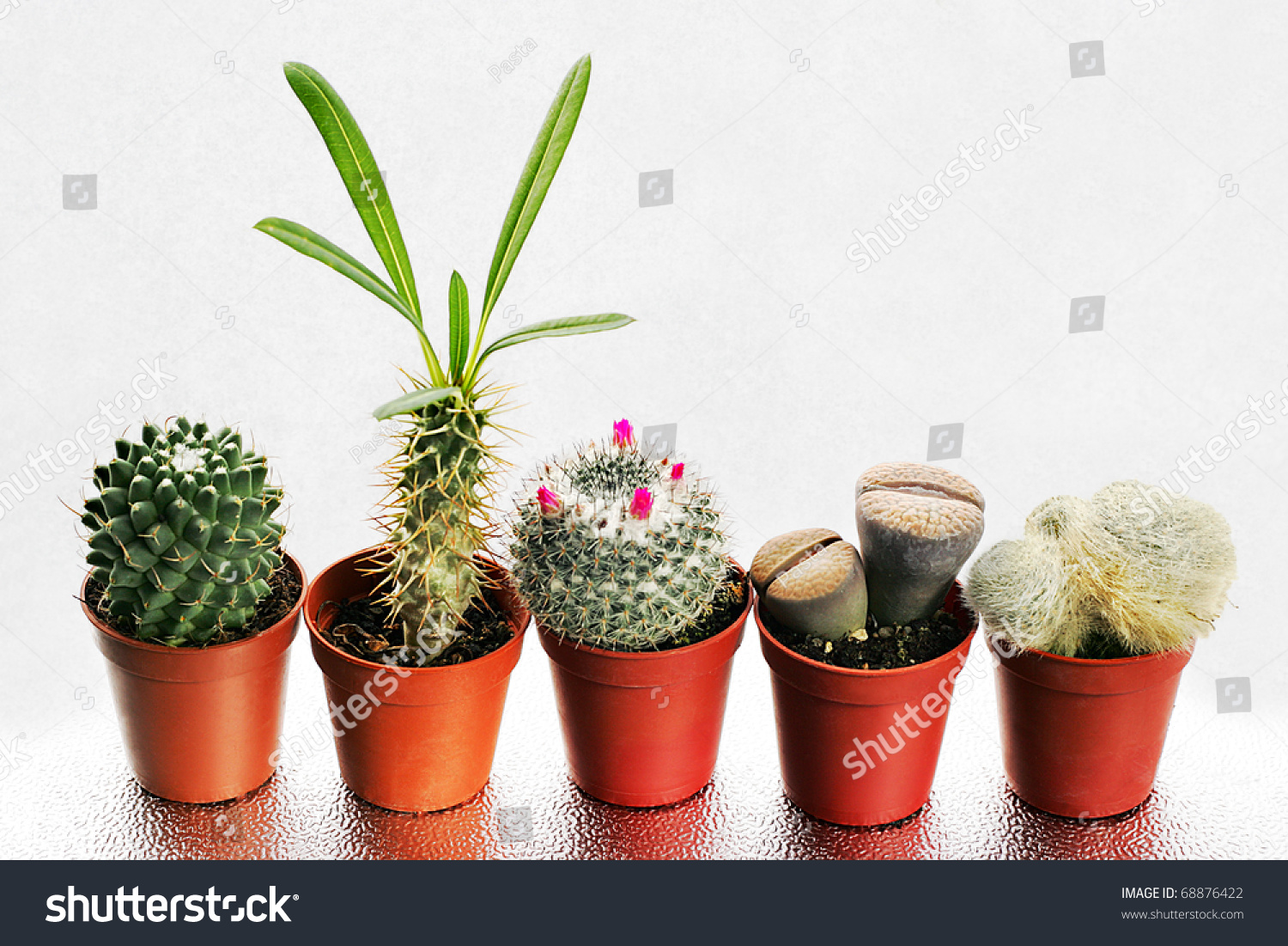 Small Cactus and Succulents - Best4Garden