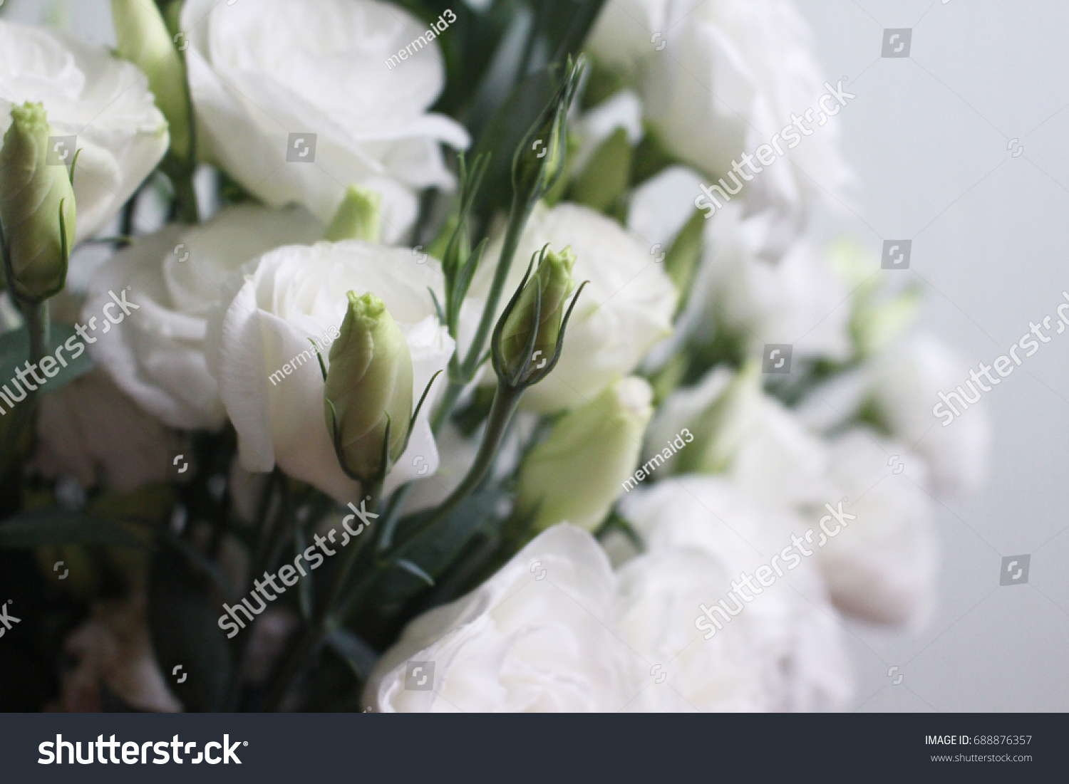 Eustom Chinese Rose Cute Bouquet Flowers Stock Photo (Royalty Free ...