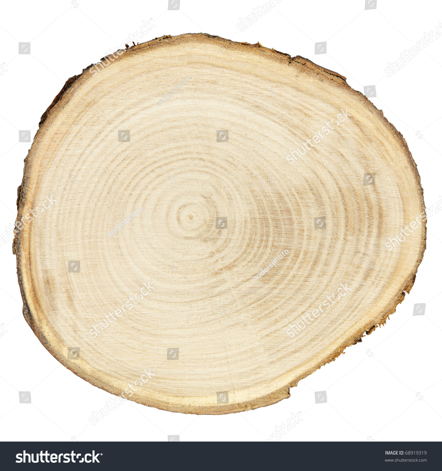 Cross Section Tree Trunk Isolated On Stock Photo 68919319 ...