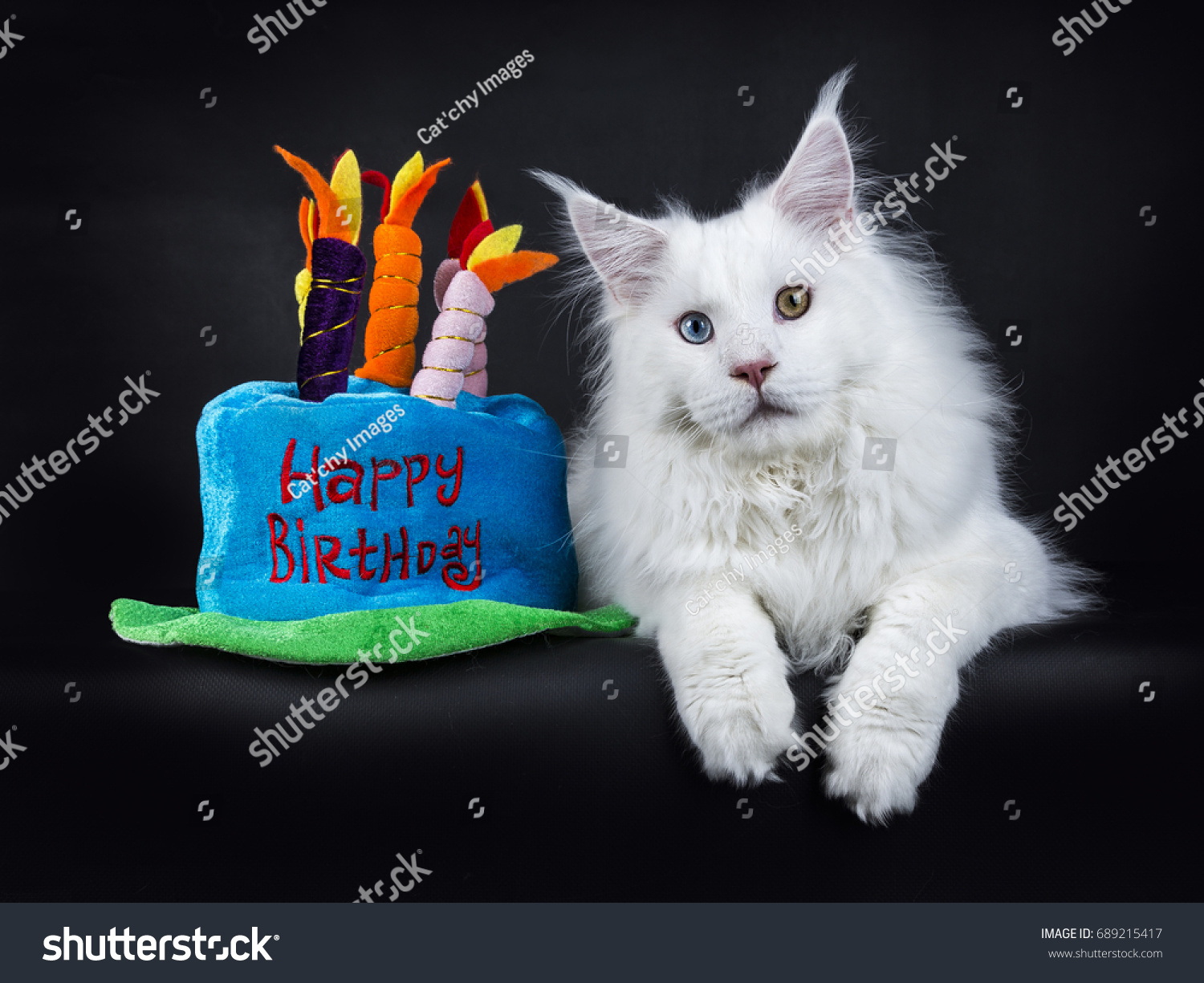Birthday Cake For Pet Cat - This cat eating a birthday cake is everything you need in life
