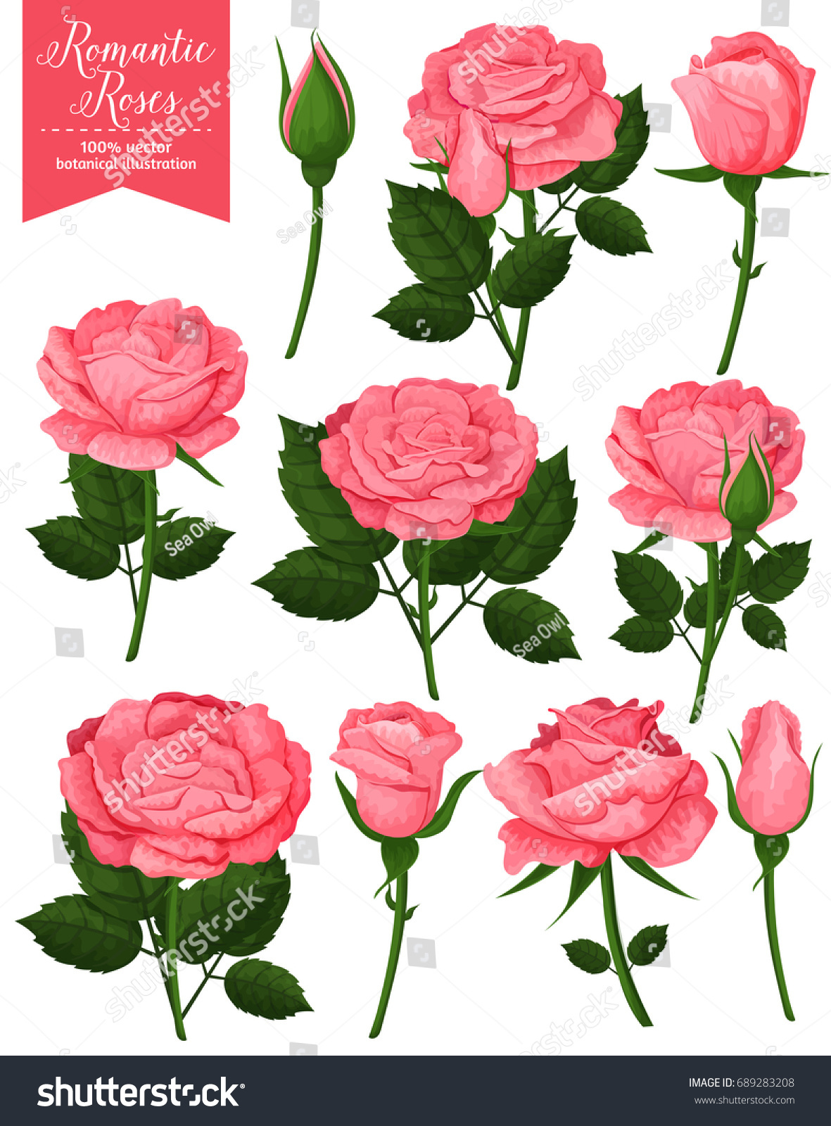 Beautiful Pink Roses Flowers Icons Set Stock Vector Royalty Free