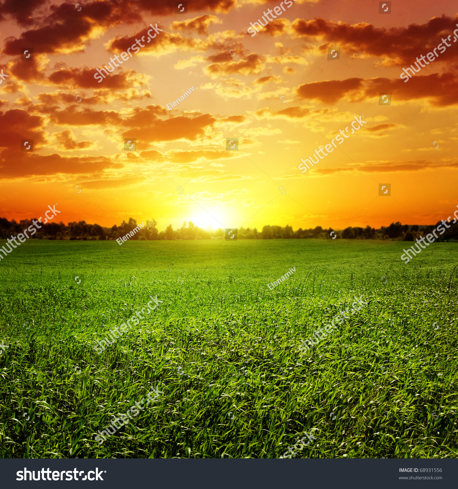 grass field sunset. Field Of Grass And Colorful Sunset. Sunset