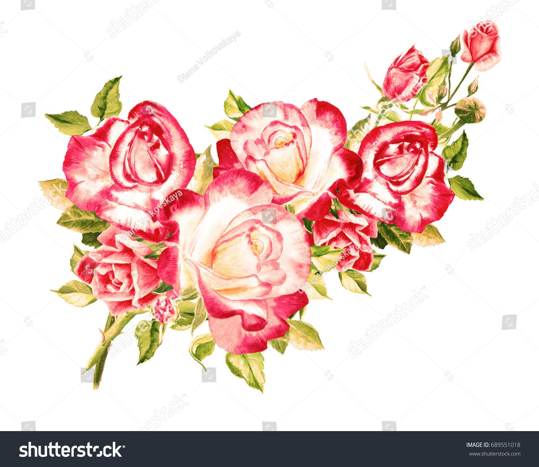 Watercolor pink roses vintage rose bush stock illustration 689551018 watercolor pink roses vintage rose bush bouquet of roses beautiful flowers watercolor izmirmasajfo
