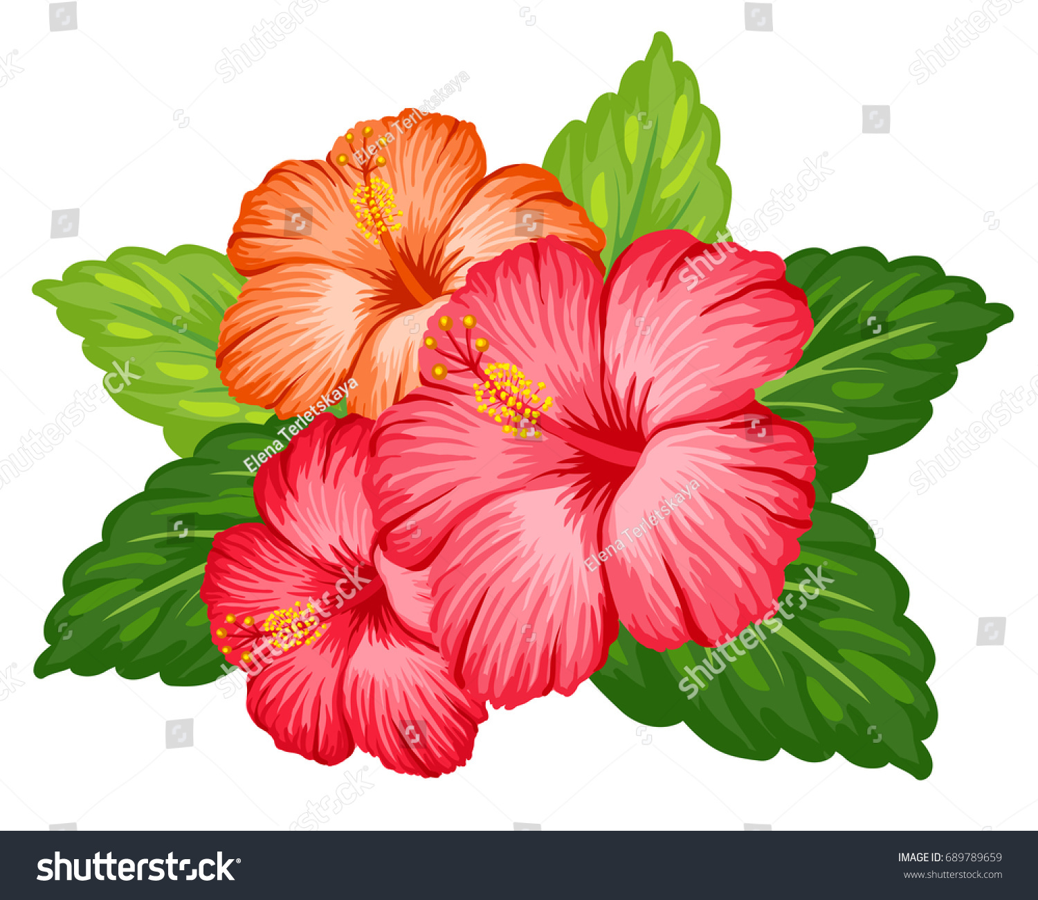 Hibiscus Flower Bouquet Images - Flower Wallpaper HD