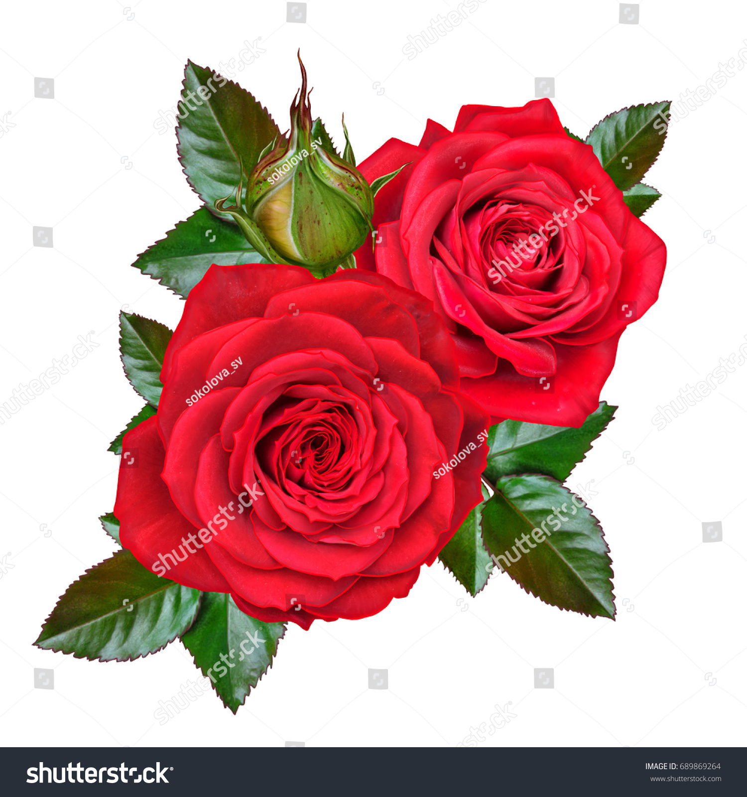 Flower composition bud beautiful red rose stock illustration flower composition a bud of a beautiful red rose and green leaves isolated on izmirmasajfo Choice Image