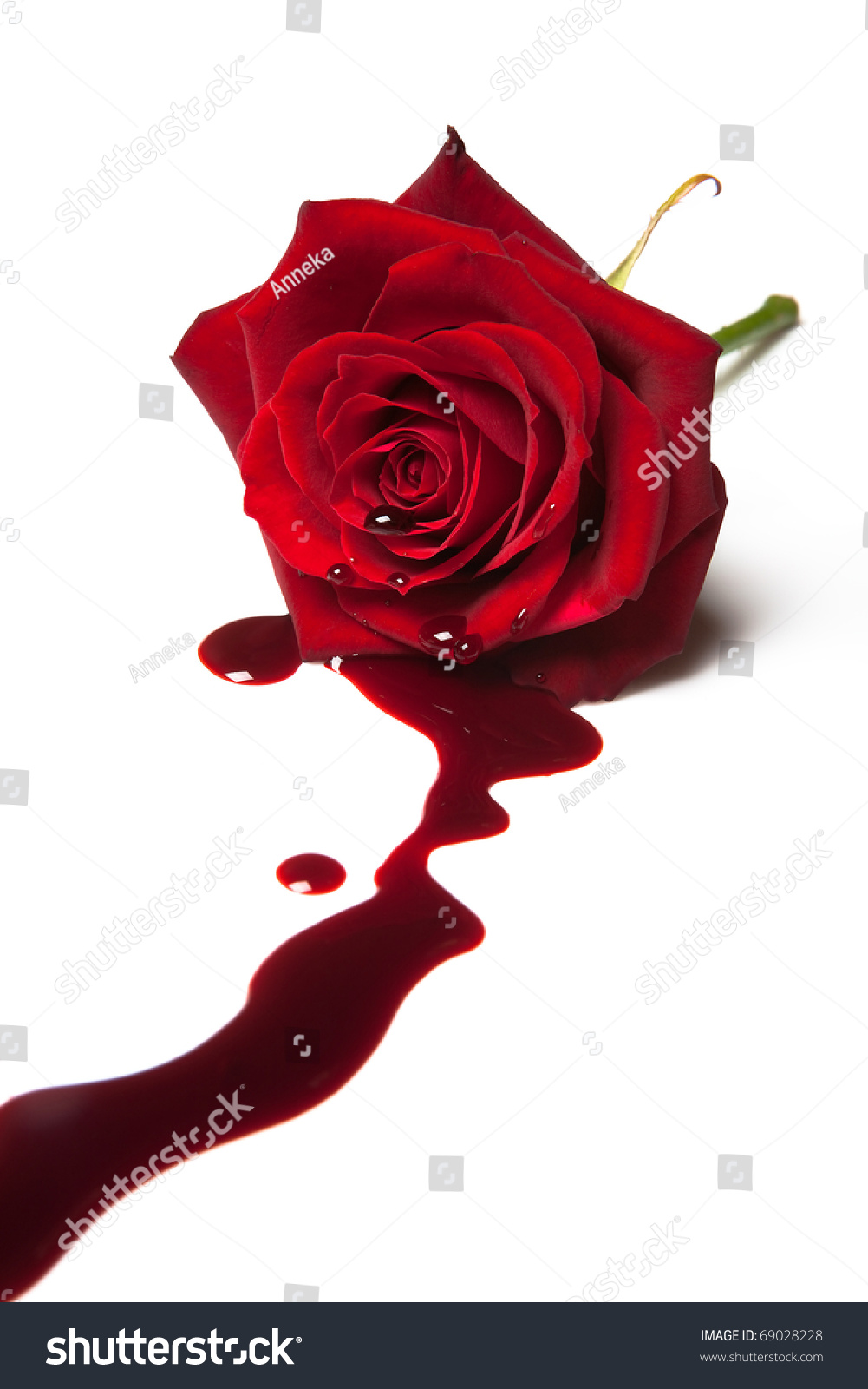 Red Rose Blood Flowing Out Heart Stock Photo 69028228 Shutterstock ...