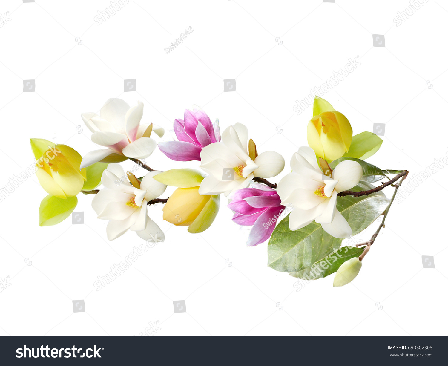 Beautiful Color Magnolia Flower Bouquet On Stock Photo (Royalty Free ...
