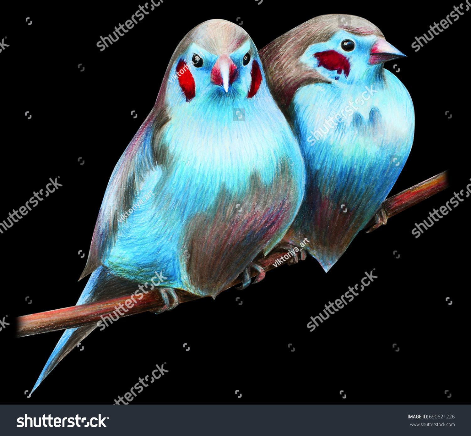 Cordon blue finch bird drawing stock illustration 690621226 cordon blue finch bird drawing biocorpaavc