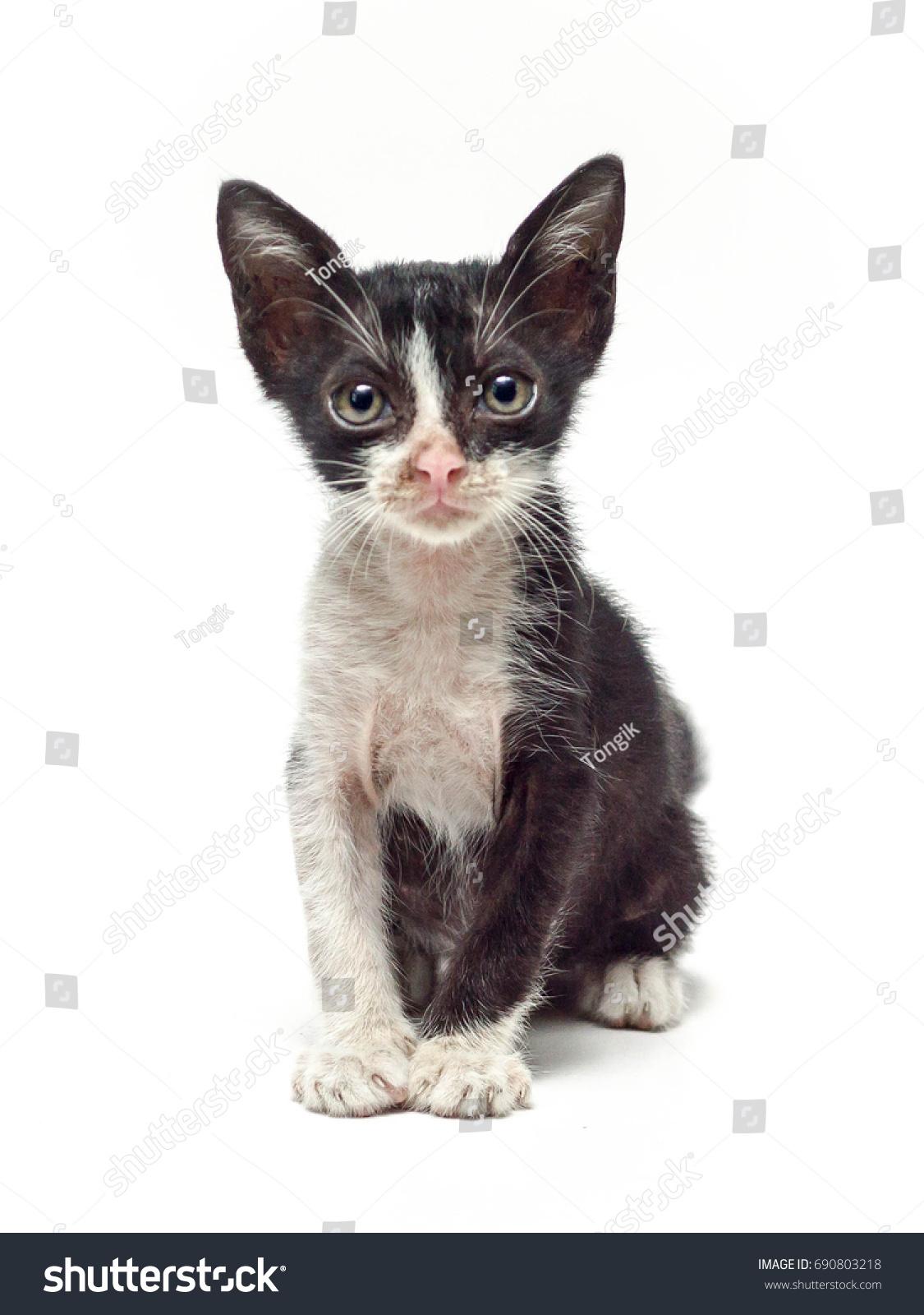 Ugly Black White Kitten Stock Photo Edit Now 690803218