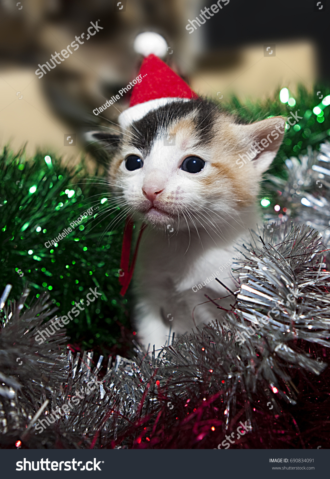 Kitten Christmas Hat Stock Photo (Edit Now) 690834091 - Shutterstock