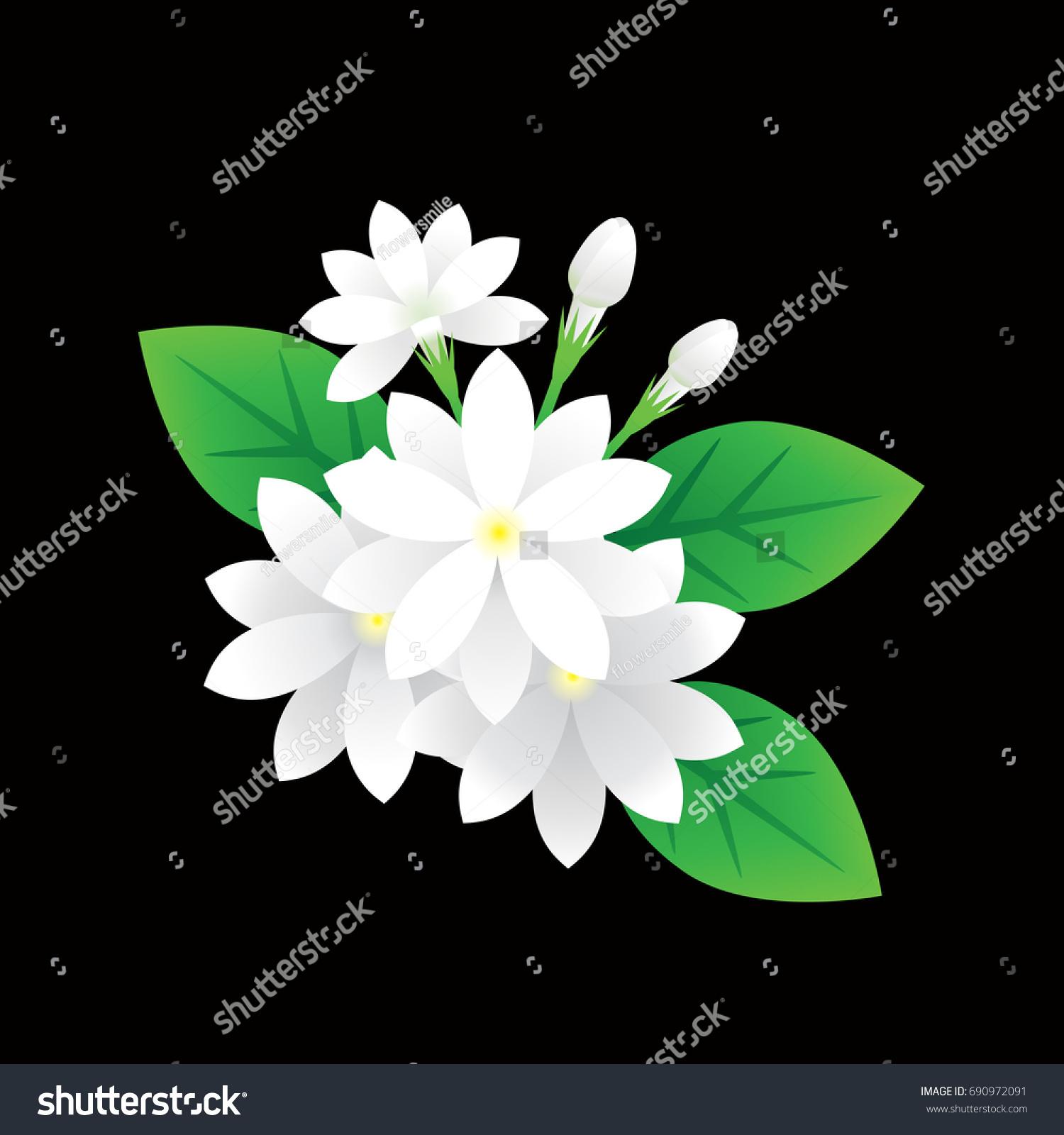 Jasmine flower vector on black background stock vector royalty free jasmine flower vector on black background symbol for mother day in thailand beautiful flora izmirmasajfo