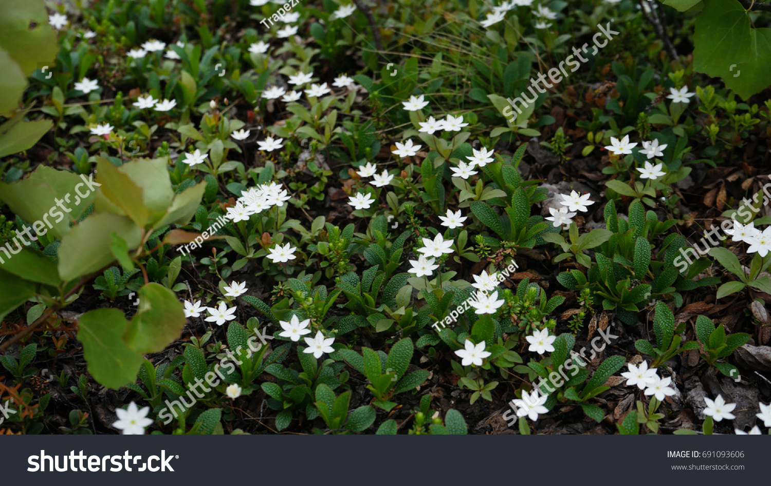 Small White Flowers Plants Tundra Swaying Stock Photo Edit Now