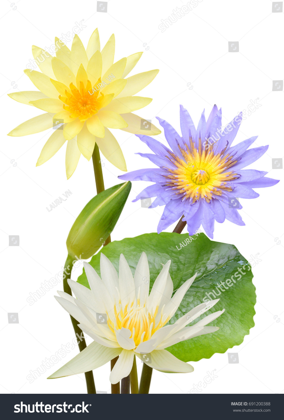 Beautiful Water Lily Flowers Isolated On Stock Photo Edit Now