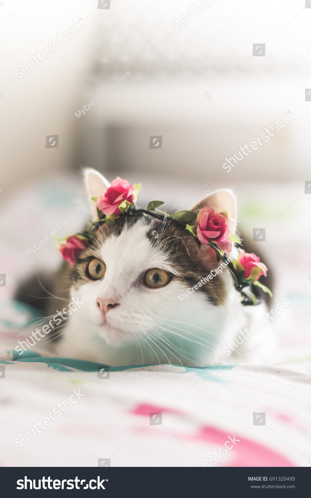 Beautiful Young Cat Flower Crown Stock Photo Edit Now 691320499