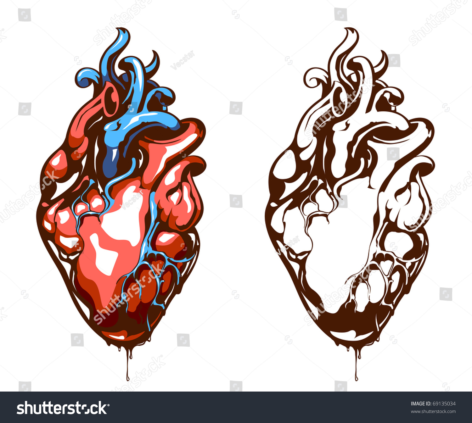 Anatomical Heart Isolated On White Grunge Stock Vector ...