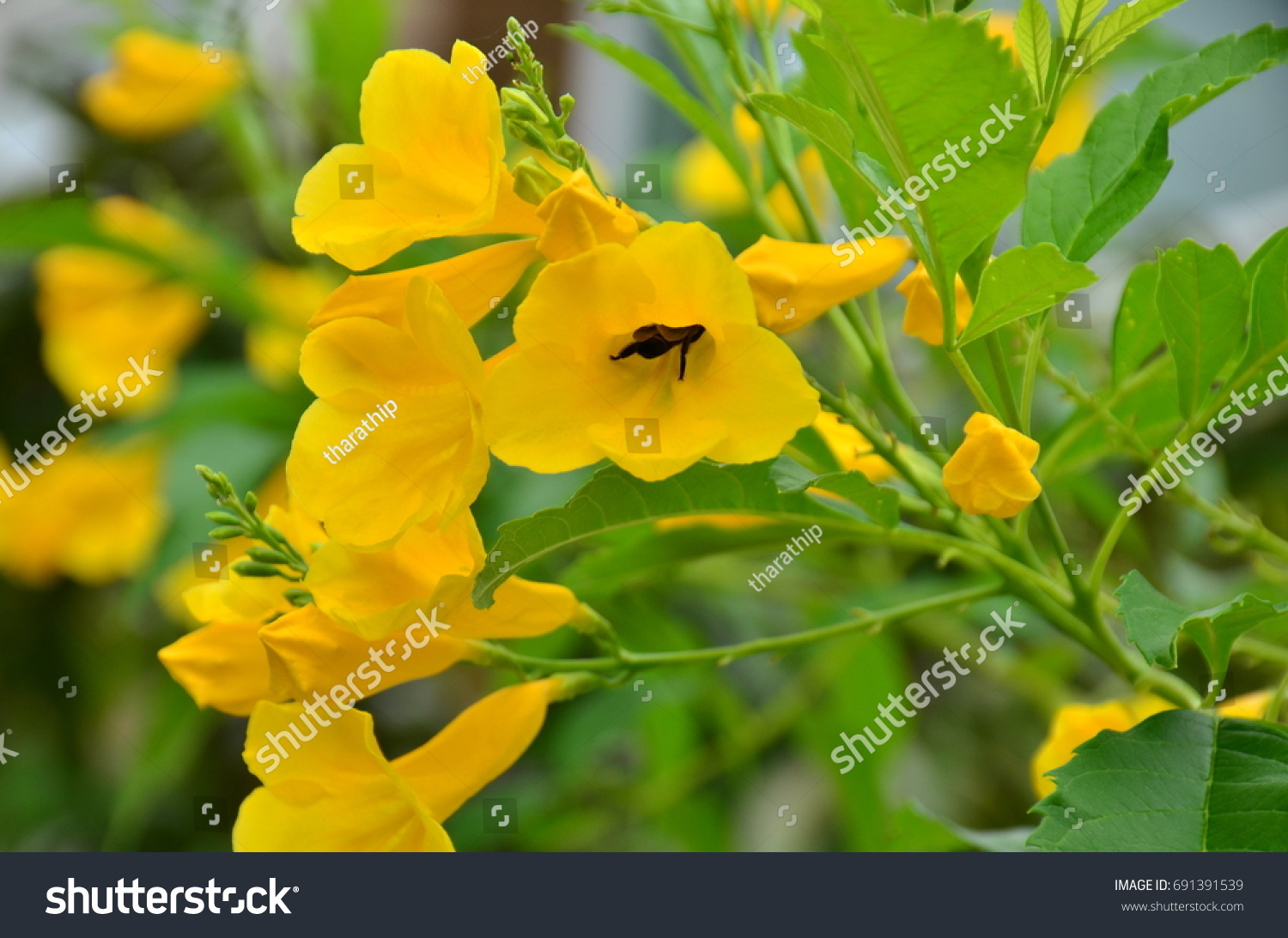 Yellow Flowers And Green Leaves Bright Yellow Flowers Rich Bouquet