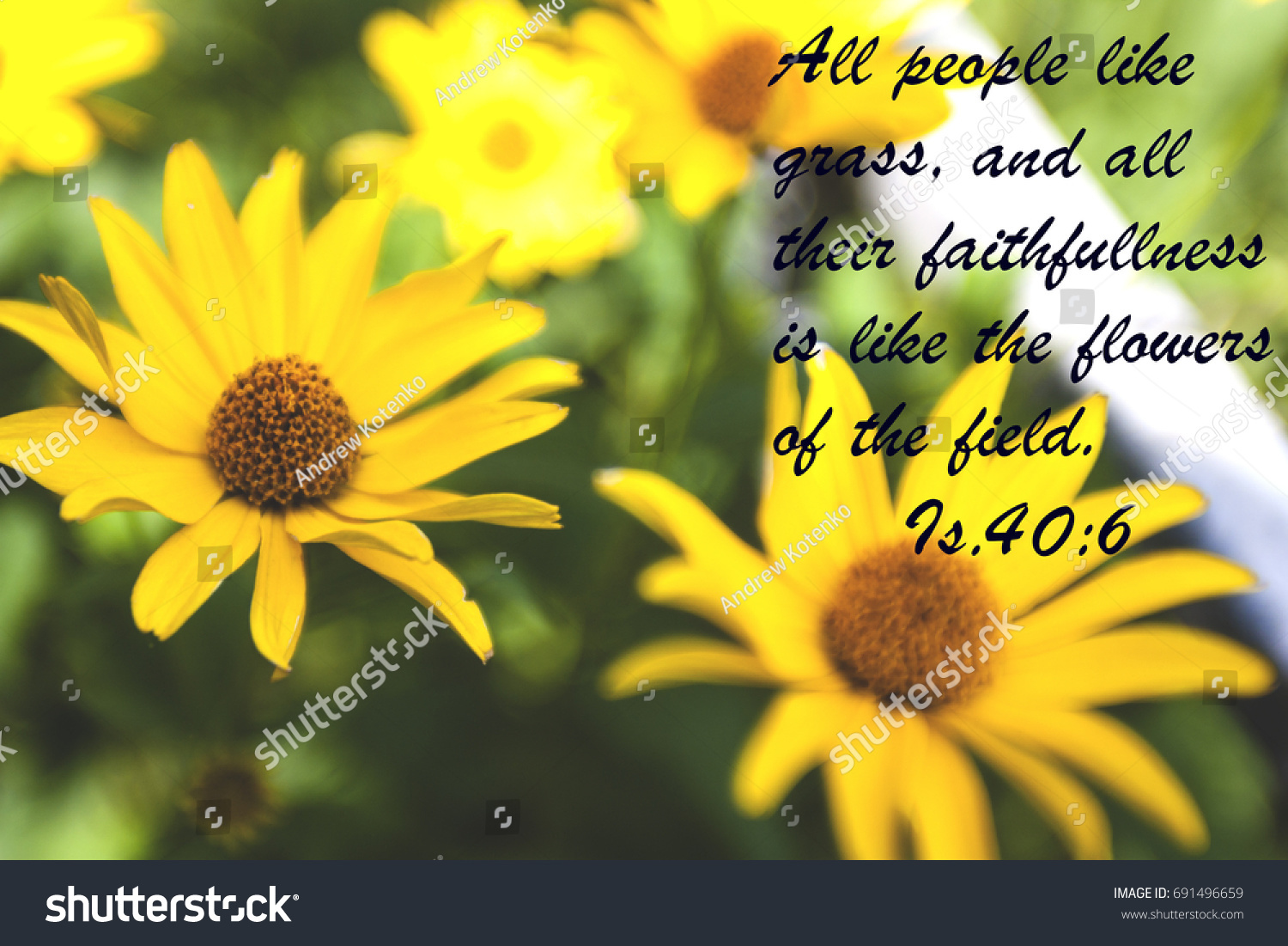 Yellow Flowers Quote Bible Stock Photo Royalty Free 691496659