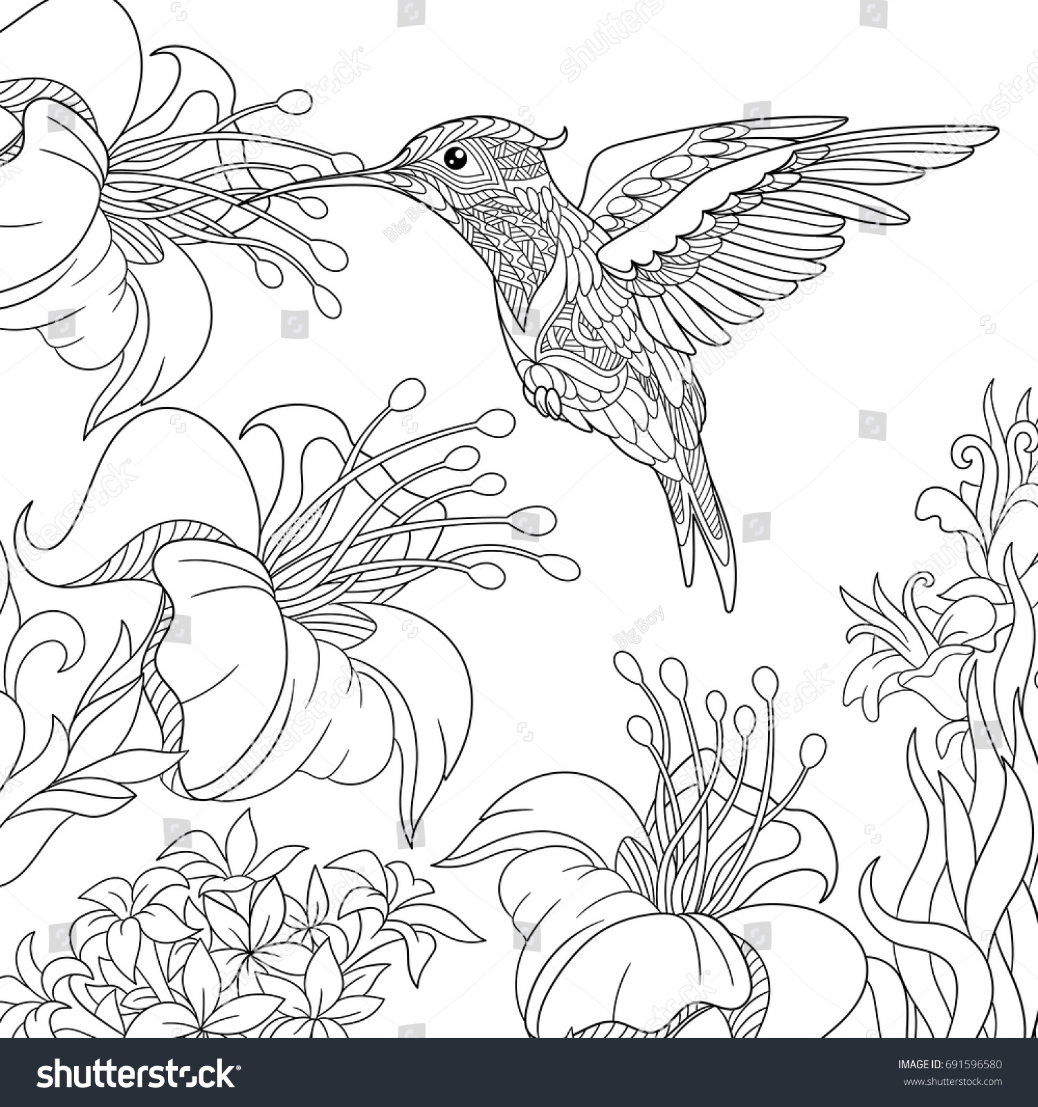 coloring page hummingbird hibiscus flowers freehand เวกเตอร สต อก