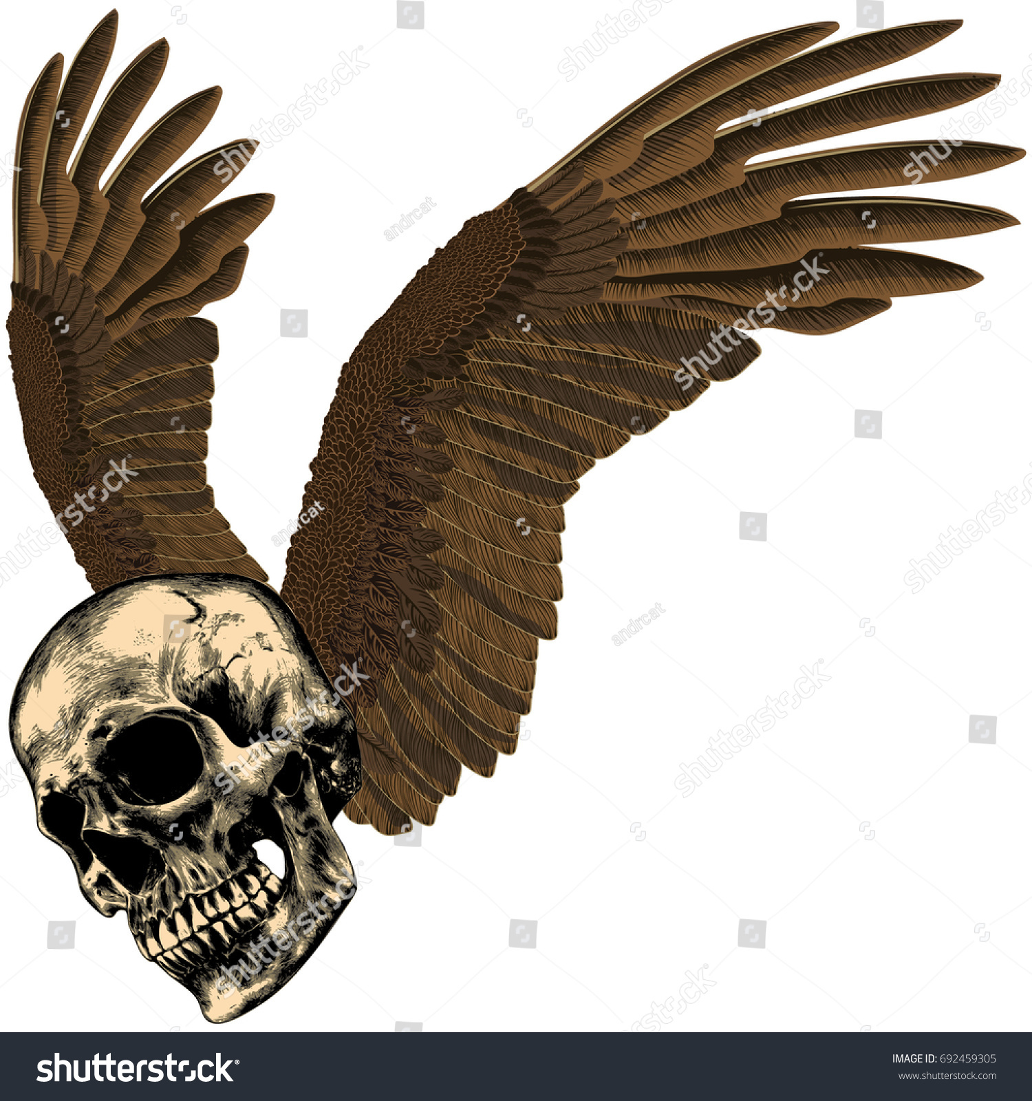 Human Skull Eagles Wings On Empty Stock Vector Royalty Free Eagle Wing Diagram Of Bald With An Background