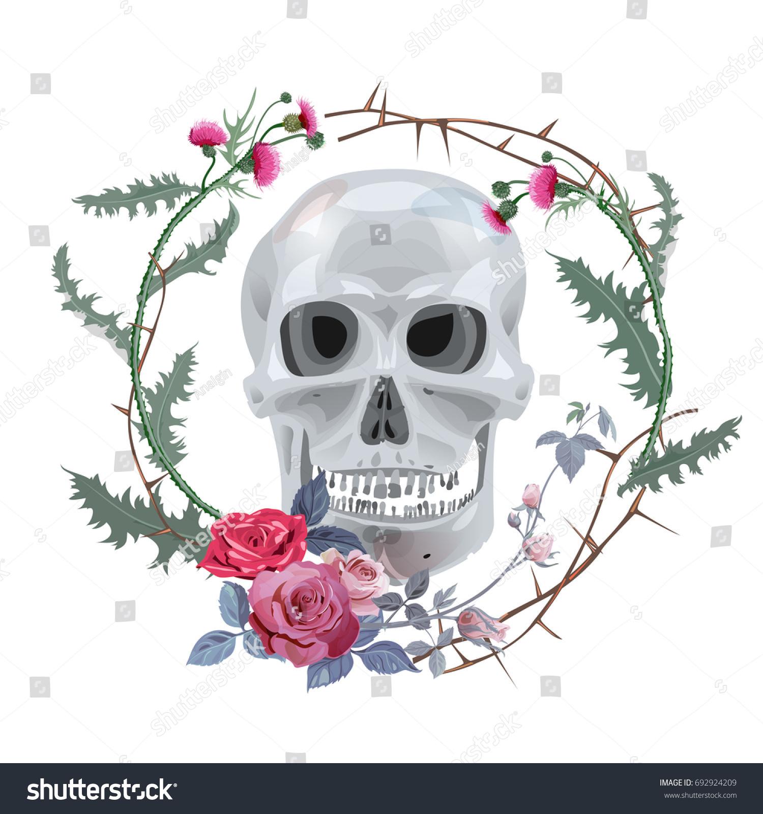 Monochrome Gray Skull Frame Thistle Red Stock Vector 692924209 ...