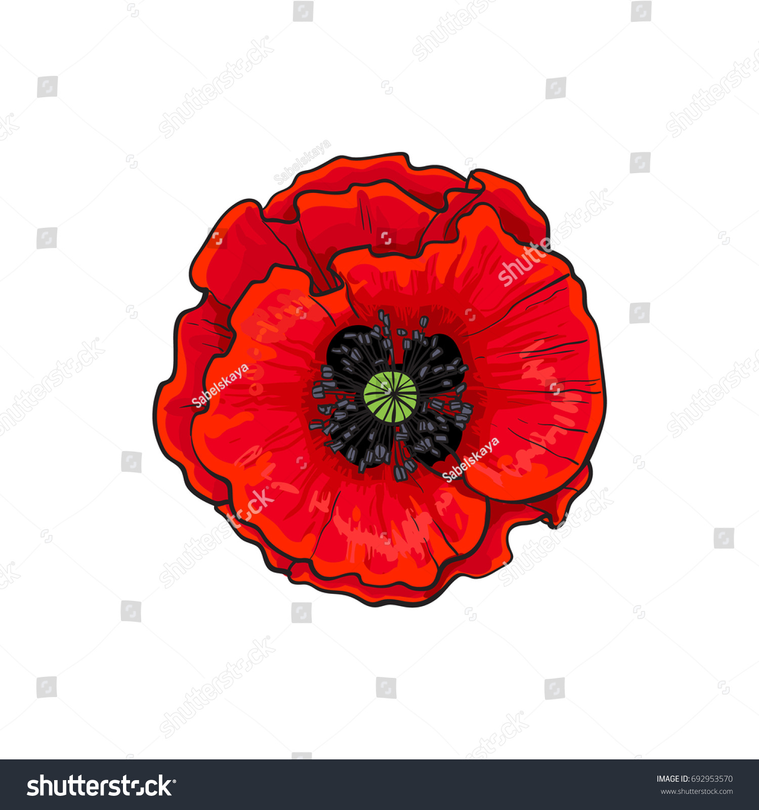 Vector Red Poppy Flower Blooming Closeup Stock Vector 692953570