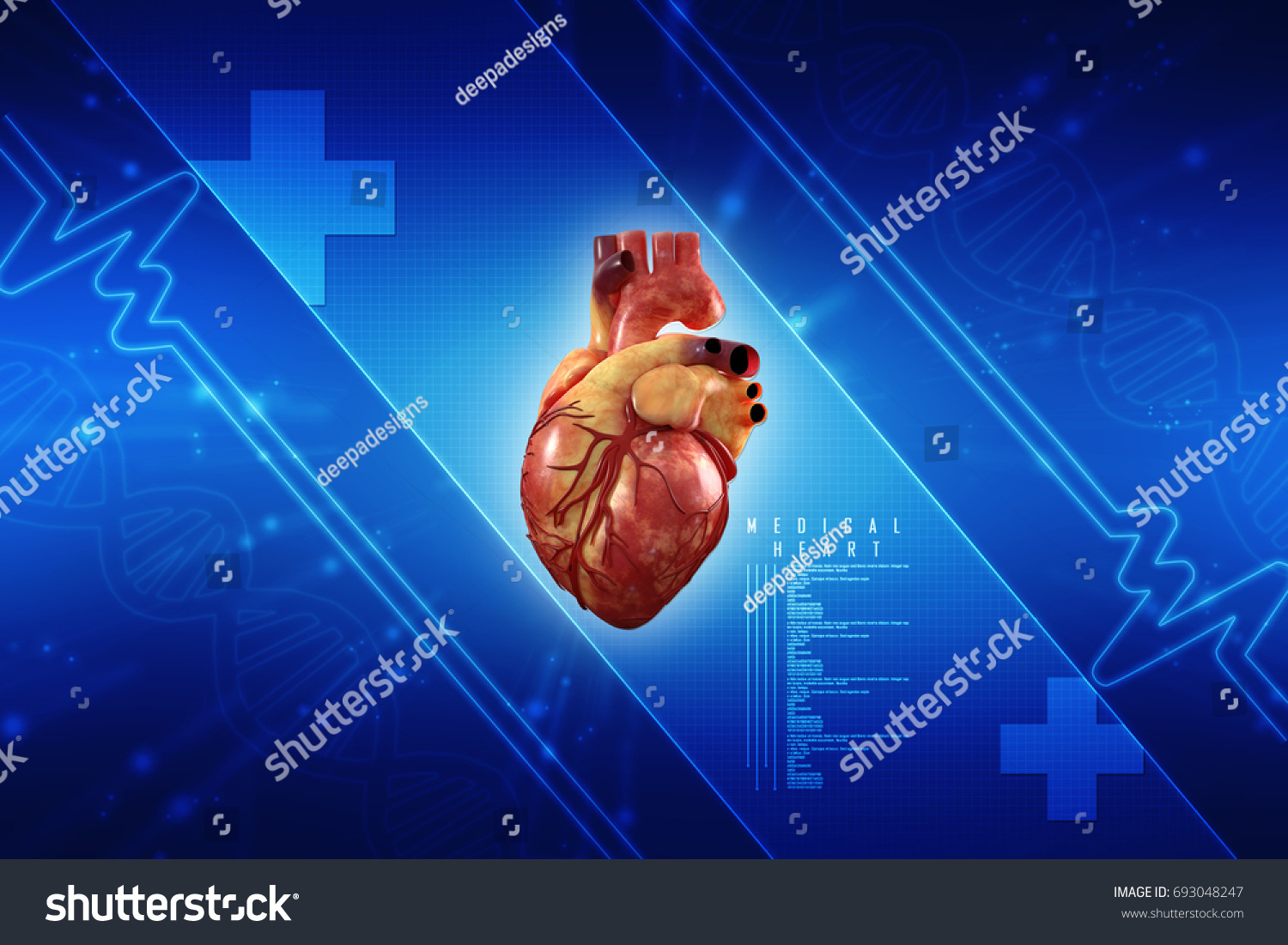 3 D Anatomy Human Heart Stock Illustration 693048247 - Shutterstock
