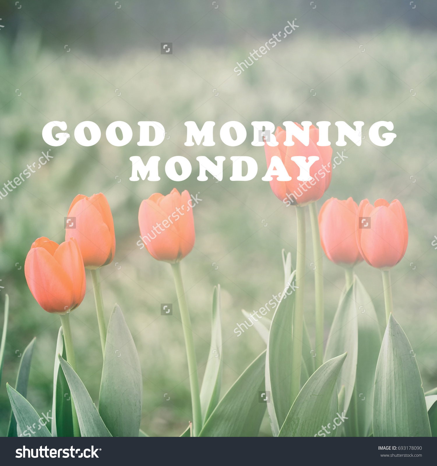 Monday Inspirational Greeting Good Morning Monday Stock Photo Edit