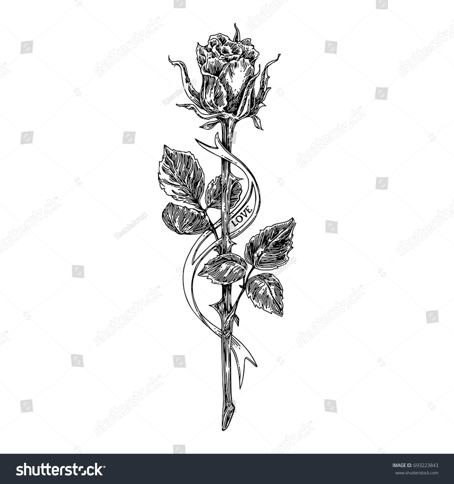 Sketch Tattoo Rose On Long Stem Stock Vector Royalty Free 693223843